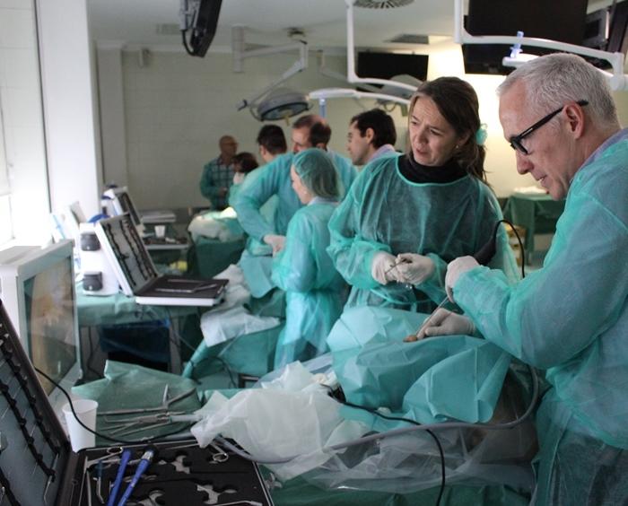Laboratorio de Anatomía Aplicada: V Curso de Cirugía Endoscópica ...